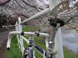 桜とサドルといい天気